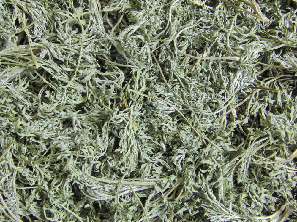 Wormwood, dried medicinal herb from Ukraine