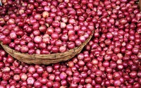 lowest price fresh red onion in egypt