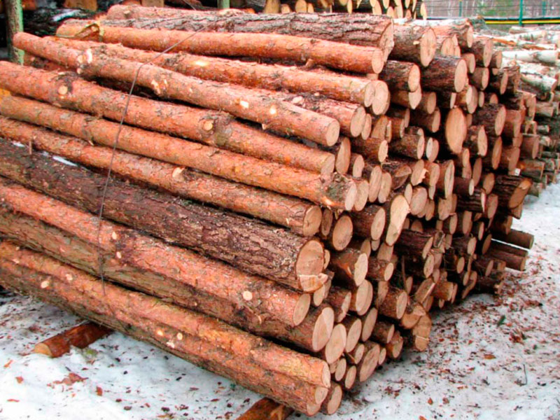Logs and chips of pine, eucalyptus and others