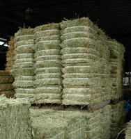 Alfalfa Hay Bales for Animal Feed