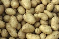 Fresh Potatoes From Kenya with A Price Discount