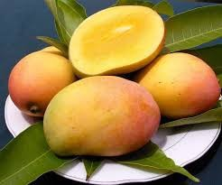 Magic Gro Plus for Organic Mango Farming