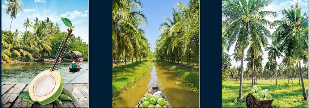 500ml Pineapple Flavor Coconut Water