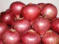 Onion Seeds supplier