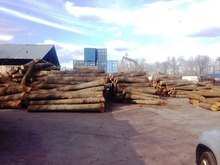 Pine logs from Ukraine