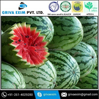 High Grade Quality Watermelon For Best Price