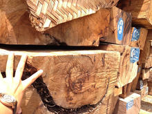 Hardwood Type and Square Shape Pine and Oak Teak Wood Logs and Timber and Firewood and Briquettes