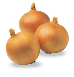 Fresh yellow onion exporters