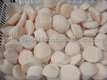 Grade A Quality Frozen Sea Scallop for sale