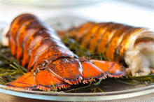 Frozen Whole Lobsters Price