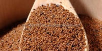 BROWN TEFF GRAIN FROM ETHIOPIA