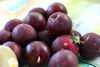 Fresh Plums , Fresh Red Plums , Wholesale Fresh Plums , Bulk Fresh Plums , Cheap Fresh Plums