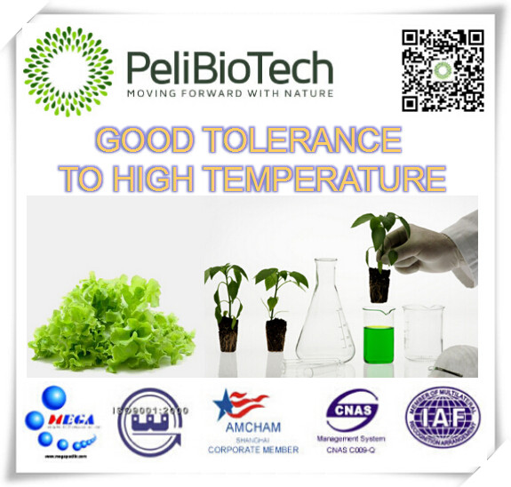 Thermostable High-temperature alpha-Amylase widely used in manufacture of alcohol,brewery,soy sauce