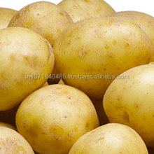 Export Quality Farm Fresh Potato