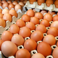 Fresh Table Chicken Eggs Available