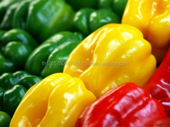 New crop Fresh green/red/yellow Capsicum