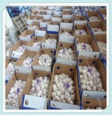 snow white garlics price with high quality