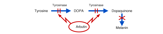 100% Natural Alpha arbutin prices,arbutin,beta arbutin 99.5%