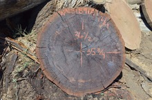 Walnut slabs - whole logs available