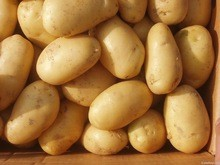 Farm Fresh Potatoes from Holland