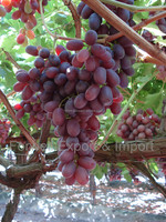 5KG grapes packing