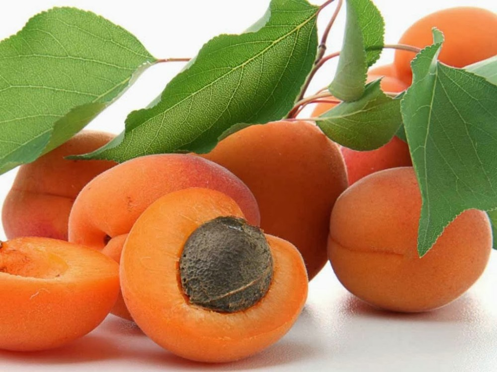 72869-69-3 Apricot Kernel Carrier Oil by Maa Bhagwati Exports