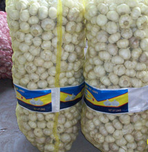 Fresh Normal White Garlic / Fresh Thailand Garlic / Big Size Garlic , Grade A pure white garlic