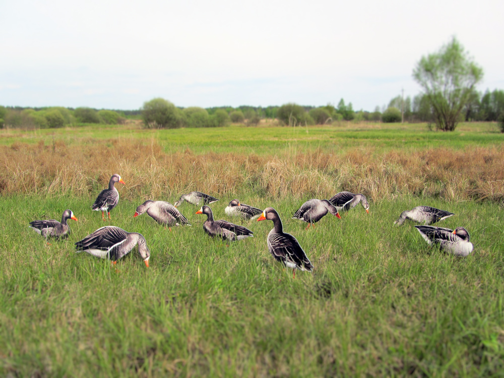 Goose decoys 12 pcs