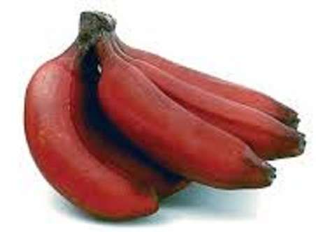Red Banana for sale