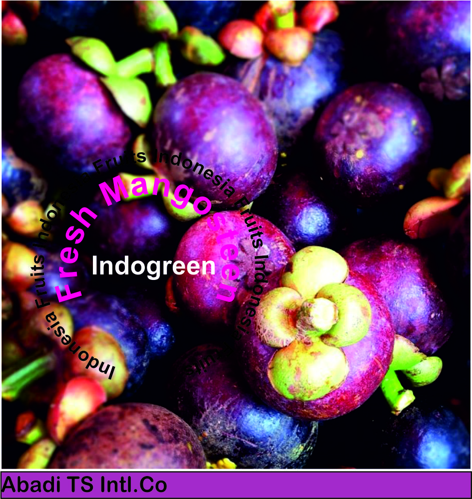 Fresh Fruit Mangosteen Manggis Indonesia