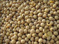 Soybean Seed - Visit www.agriprices.com For Wholesale Price Discounts On Soybean Seed