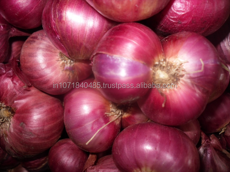 Small Onion Exporters from India