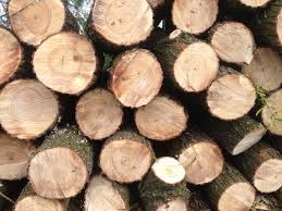 Pine wood, spruce wood freshly cut sawn timber