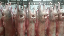 Australian Halal Lamb, Sheep & Goat Carcases and Sheep & Goat Offals (Chilled or Frozen) - Establishment 388