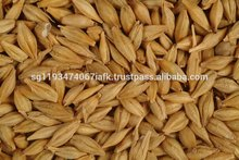 Buy Premium Quality Animal Feed Barley