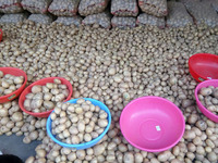 fresh potatoes exporter from india