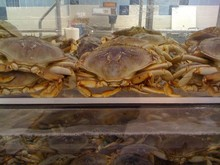 Affordable Fresh Live Mud Crab For Export