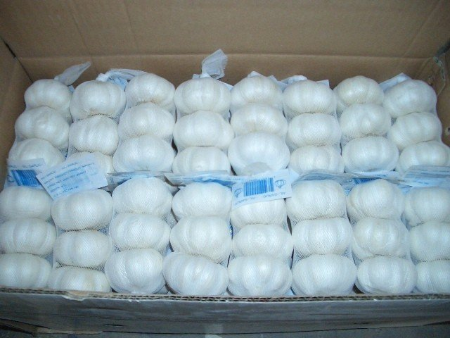 5.5cm FACTORY PURE WHITE FRESH GARLIC AT BEST PRICE