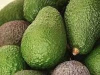 FRESH AVOCADO: High Qualiy and Competitive Price