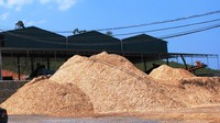 Wholesale PEFC/FFC Wood Chips - Cuts - Sawdust - Wood Shavings, for Paper Pulp, MDF.