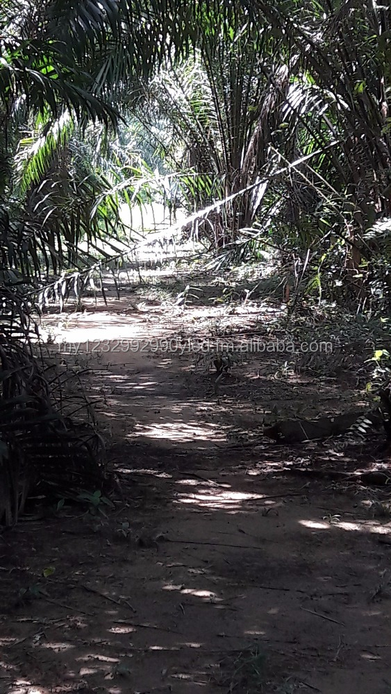 5000 Sq Feet Oil Palm Land for Sale near Morib Beach