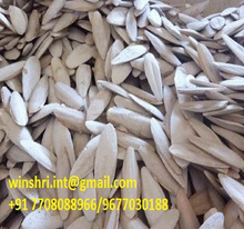 UNTRIMMED/TRIMMED CUTTLEFISH BONE PACKED IN BAGS