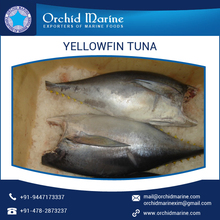 Premium Quality Well Known Distributor Supplying H&G Yellowfin Tuna Price