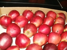 Fresh Fuji Apple fruits for sale