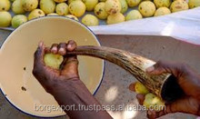 Marula Essential Oil/Marual Oil From Borg Export