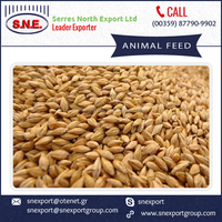 Premium Quality Wheat Bran Animal Feed for Cattle and Horses
