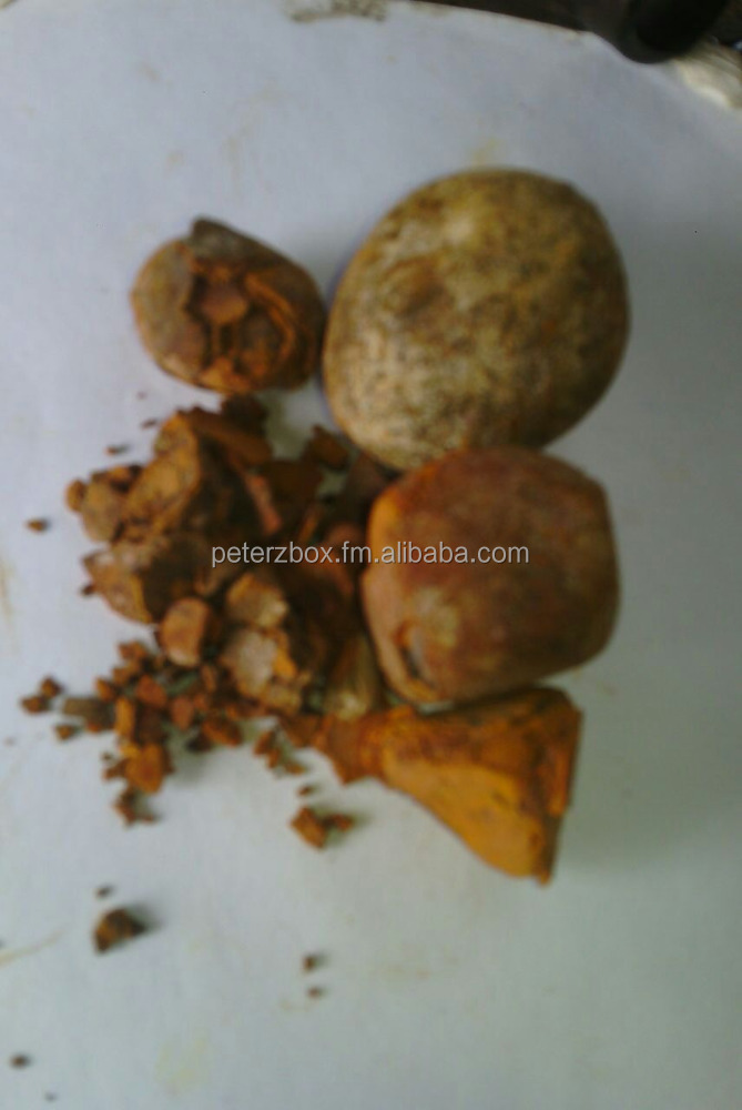 Cattle , Cow, Ox gallstone