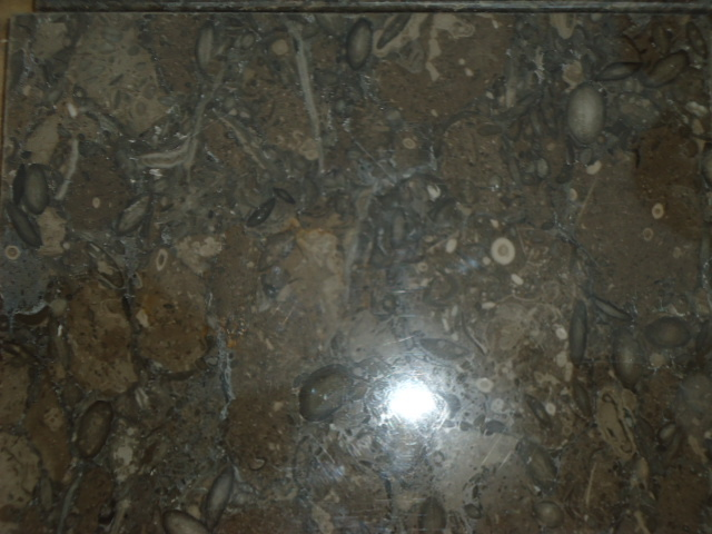 Fossil marble 30x120