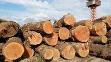 Hard Wood ,Timber and Logs