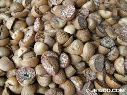 Indian Betal Areca Nut